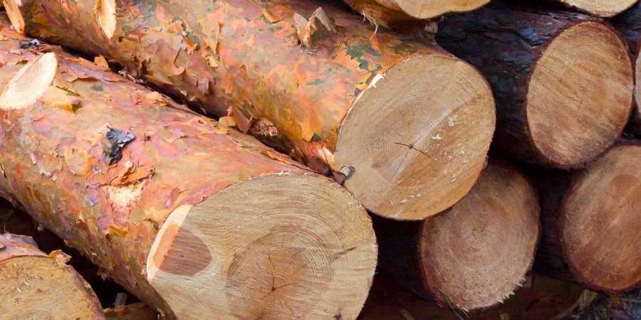 Troncoscompletos de arboles de pino