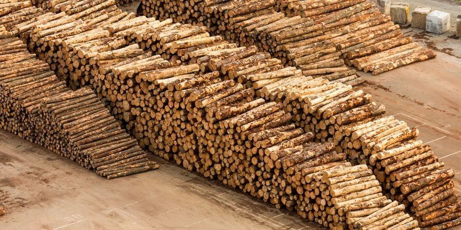 New Zealand Wood Diversidad de tipos de madera NZ
