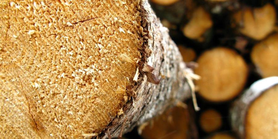 Tipos de madera de nueva zelanda